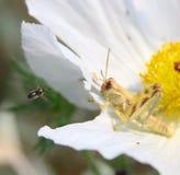 συσσωρευμένο λουλούδ Στοκ εικόνες με δικαίωμα ελεύθερης χρήσης