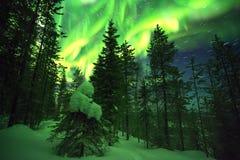 Συσσωρευτικός δασικός, έναστρος ουρανός χρονικού σφάλματος με τα ίχνη αστεριών και πράσινα βόρεια φω'τα στο φινλανδικό Lapland απόθεμα βίντεο