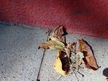 συσσωρεύστε τα φύλλα Στοκ Φωτογραφίες