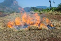 Συσσωρεύστε το δέντρο φασολιών καηκε Στοκ φωτογραφία με δικαίωμα ελεύθερης χρήσης