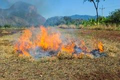 Συσσωρεύστε το δέντρο φασολιών καηκε Στοκ Φωτογραφία