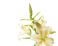 συσσωρεύστε το λευκό &kappa στοκ φωτογραφίες με δικαίωμα ελεύθερης χρήσης