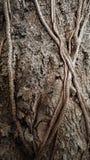 Συστάσεις δέντρων Στοκ φωτογραφία με δικαίωμα ελεύθερης χρήσης