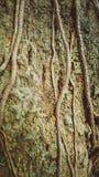 Συστάσεις δέντρων Στοκ εικόνες με δικαίωμα ελεύθερης χρήσης