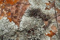 Συστάσεις βράχου και βρύου Στοκ Φωτογραφίες