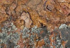 Συστάσεις βράχου και βρύου Στοκ Εικόνα