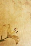 συστάσεις εγγράφου λ&omicron ελεύθερη απεικόνιση δικαιώματος