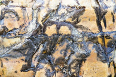 συστάσεις πετρών αβαείων whitby Στοκ εικόνες με δικαίωμα ελεύθερης χρήσης