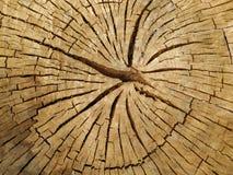Συστάσεις του κομμένου δέντρου με τις ρωγμές στοκ εικόνες