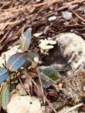 Συστάσεις του φθινοπώρου στοκ φωτογραφίες