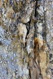 Συστάσεις φλοιών δέντρων τροπικών δασών στοκ φωτογραφία με δικαίωμα ελεύθερης χρήσης