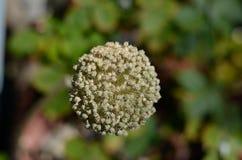 Συστάδα των μικρών λουλουδιών Στοκ Εικόνα