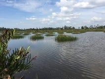 Συστήματα υδατοκαλλιέργειας, εκτενές αγρόκτημα πολιτισμού γαρίδων τιγρών Στοκ Εικόνα