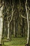 Συχνασμένα ξύλα Στοκ Φωτογραφία
