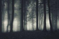 Συχνασμένο σκοτεινό δάσος με την ομίχλη Στοκ Φωτογραφία
