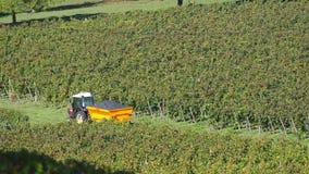 Συλλεκτικές μηχανές σταφυλιών που συγκομίζουν τα σταφύλια στους αμπελώνες του Μπορντώ κοντά στην Άγιος-Emilion-Γαλλία απόθεμα βίντεο