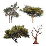 Συλλογή δέντρων Τέσσερα διαφορετικά δέντρα που απομονώνονται στο άσπρο backgrou Στοκ Εικόνα