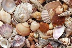 συλλογή ανασκόπησης που απομονώνεται πέρα από το λευκό θαλασσινών κοχυλιών στοκ εικόνες