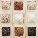 Συλλογή εννέα του ρυζιού Ταϊλανδού για το υπόβαθρο Στοκ φωτογραφία με δικαίωμα ελεύθερης χρήσης