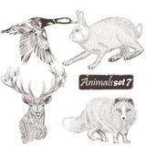 Συλλογή λεπτομερών των διάνυσμα ζώων για το σχέδιο Στοκ Εικόνες