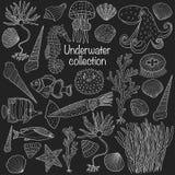 Συλλογή θάλασσας: κοχύλια, αστερίας, φύκι, ψάρια μεγάλων θαλασσίων βαθών, seahor απεικόνιση αποθεμάτων