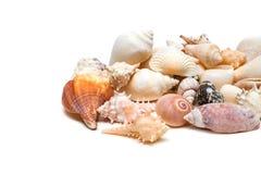 Συλλογή κοχυλιών θάλασσας που απομονώνεται στο λευκό Στοκ Φωτογραφίες