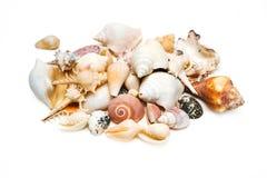 Συλλογή κοχυλιών θάλασσας που απομονώνεται στο λευκό Στοκ Εικόνα