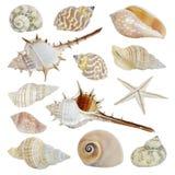Συλλογή κοχυλιών θάλασσας Στοκ Εικόνες