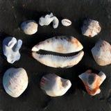 Συλλογή κοχυλιών στο μαύρο υπόβαθρο Θερινές διακοπές από τις μνήμες θάλασσας Στοκ εικόνα με δικαίωμα ελεύθερης χρήσης