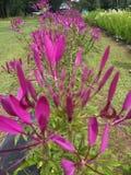 Συλλογή λουλουδιών Στοκ Εικόνες