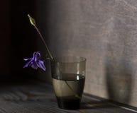 Συλλογή λουλουδιών Στοκ εικόνα με δικαίωμα ελεύθερης χρήσης