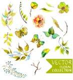 Συλλογή λουλουδιών Watercolor για το διαφορετικό σχέδιο απεικόνιση αποθεμάτων