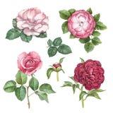 Συλλογή λουλουδιών Watercolor ελεύθερη απεικόνιση δικαιώματος