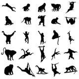Συλλογή πίθηκων και πιθήκων Στοκ Εικόνα