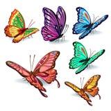 συλλογή πεταλούδων ζωη Διανυσματική απεικόνιση
