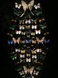 Συλλογή πεταλούδων Στοκ Εικόνες