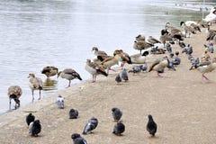 συλλογή πουλιών Στοκ φωτογραφία με δικαίωμα ελεύθερης χρήσης