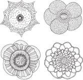 Συλλογή που τίθεται με τα τροπικά λουλούδια Συρμένο χέρι γραφικό διάνυσμα Στοκ φωτογραφία με δικαίωμα ελεύθερης χρήσης