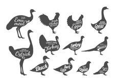 Συλλογή σκιαγραφιών πουλερικών, πρότυπα ετικετών κρεοπωλείων Στοκ Εικόνα