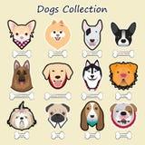 συλλογή σκυλιών, διάνυσμα Στοκ Φωτογραφία