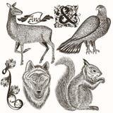 Συλλογή συρμένων των χέρι ζώων για το σχέδιο κυνηγιού Στοκ Εικόνα