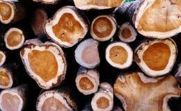 Συλλογή της ξύλινης σύστασης Στοκ φωτογραφία με δικαίωμα ελεύθερης χρήσης