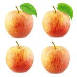 Συλλογή της Apple που απομονώνεται στο άσπρο υπόβαθρο Στοκ φωτογραφία με δικαίωμα ελεύθερης χρήσης