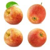Συλλογή της Apple που απομονώνεται στο άσπρο υπόβαθρο Στοκ Εικόνες