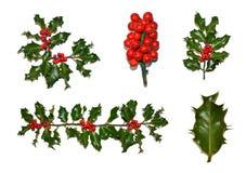 Συλλογή της Holly Χριστουγέννων Στοκ Εικόνες
