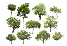 Συλλογή του απομονωμένου δέντρου στο άσπρο υπόβαθρο Στοκ εικόνα με δικαίωμα ελεύθερης χρήσης