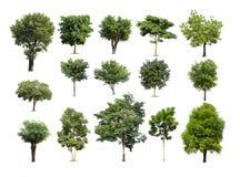 Συλλογή του απομονωμένου δέντρου στο άσπρο υπόβαθρο Στοκ Φωτογραφία