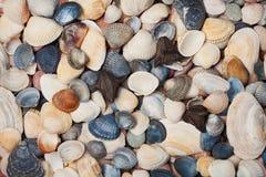 Συλλογή του θαλασσινού κοχυλιού για το υπόβαθρο, φυσική μακρο σύσταση Στοκ φωτογραφίες με δικαίωμα ελεύθερης χρήσης