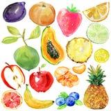 Συλλογή του χρωματισμένου συνόλου watercolor φρούτων η διακοσμητική εικόνα απεικόνισης πετάγματος ραμφών το κομμάτι εγγράφου της  Στοκ φωτογραφία με δικαίωμα ελεύθερης χρήσης