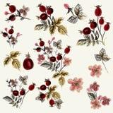Συλλογή των άγριων ροδαλών λουλουδιών Στοκ Φωτογραφίες